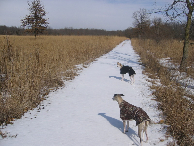Prairie_snow_walk_006_2